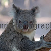 Cute Animals : Jamri Photography presents photos of cute animals from various locations