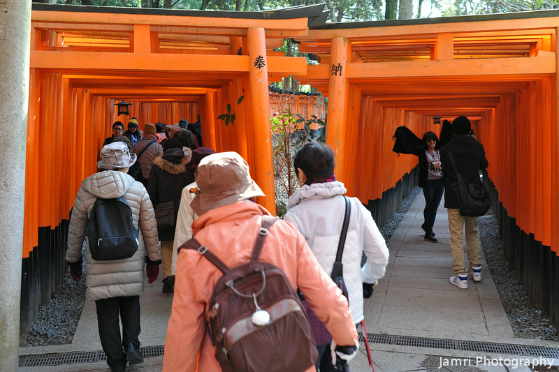 Where the Torii Path Forks