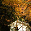 A White House and Orange Leaves. In Arashiyama, Kyoto.