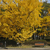 A Ginkgo and Bench