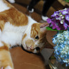 Adding Cats to the Mix.<br /> Ritsuko releases Lucy and Linus (his feet can be seen behind Lucy) to our photo session.