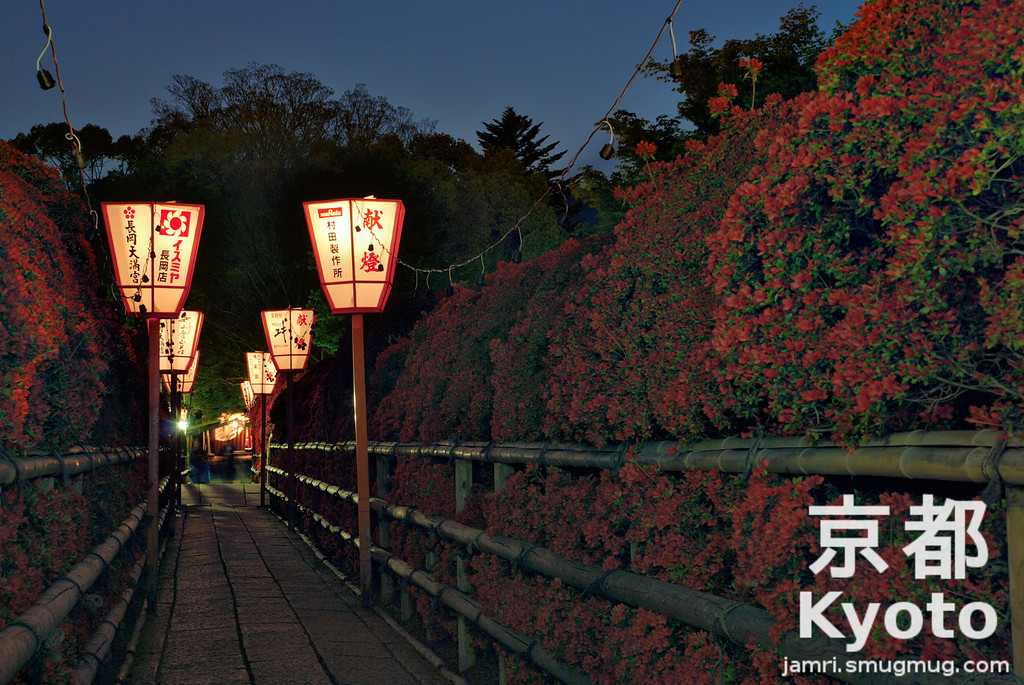 Kirishima Azaleas by Night