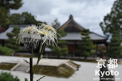 Saga Chrysanthemum at Daikaku-ji