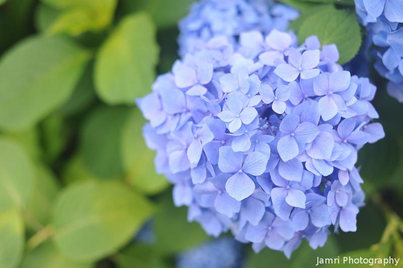 Very Blue Blooms
