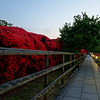 To the Side of the Azalea Tunnel.