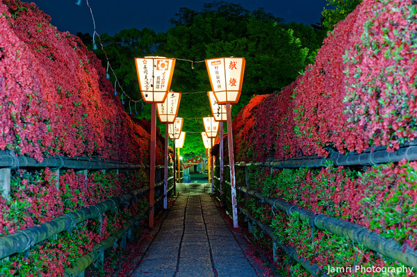 Kirishima Azaleas at Night