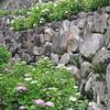 A Terrace of Hydrangeas.<br /> At Youkoku-ji (a Buddhist Temple) in Nagaokakyo.