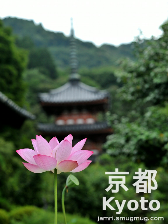 July's Flower is the Lotus